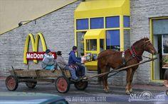 mcdrive horse