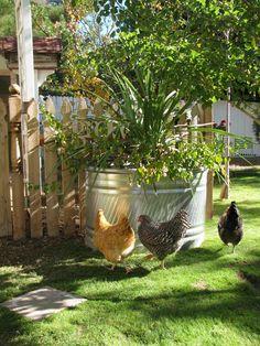 Boho Farm and Home: Tour Around the Boho Farm