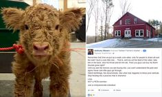 Farm under fire from animal rights protesters over calf video
