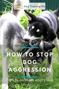How to stop dog aggression! Learn how to calm an angry dog with these tips that will put you back in charge. Your dominant dog can learn to be obedient if you start using these dog training tips. Find out all you need to know to stop dog aggression now! Dog Minding, Aggressive Dog, Dog Hacks, Dog Barking, Old Dogs, Dog Training Tips, Training Schedule, Dog Behavior, Dog Care