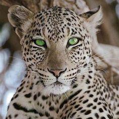 Impresionante felino...!!