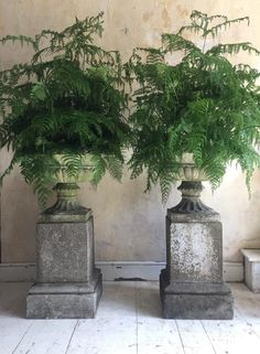 pair of mid Century concrete garden urns which are well weathered and have a wonderful patternation They have gadrooned bowls and scalloped bases # Vases, Garden Urns, Garden Paths, Garden Floor, Urn Planters, Special Flowers, Concrete Garden, Natural Garden, Garden Ornaments