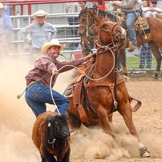 Calf roping  This is a job on a real ranch at branding time.