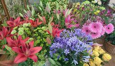 Gadea flores