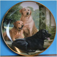 A decorative plate featuring 3 Labradors on a scenic background  £15.00 on ebid or make an offer