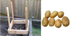 Make A Small Garden And Grow 100 Pounds Of Potatoes