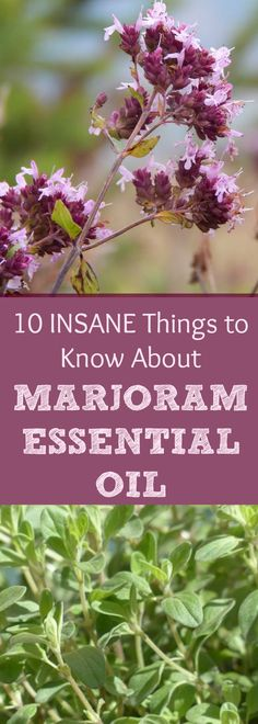 Marjoram Essential Oil is just UNBELIEVABLE! I say this because of my struggles with high blood pressure, among other reasons... Read all about Marjoram Essential Oil and why every household should have this handy!