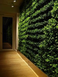Inside green wall vertical garden with variety of plants A