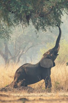 Elephant in it's home of nature, doing some yoga :-) Namaste :-)
