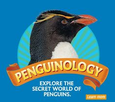 """New England Aquarium, Boston, Massachusetts. Penguinology is the latest exhibit at the ever-awesome aquarium. Their emphasis on their very cool penguin friends is both interesting and fun, and I love the hand out that comes with your admission. All the kids seemed delighted, and the adult """"children"""" (including me) all seemed equally impressed."""
