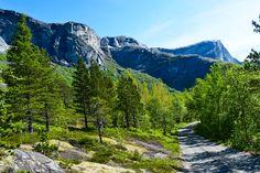 Grusveien i skogen opp til Børvatnet     http://www.tursiden.no/grusveien-i-skogen-opp-til-borvatnet/