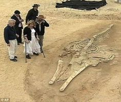 Chile desert whale fossils - creation.com