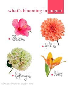 august flowers I mariana hodges for sparkyourprint.blogspot.com