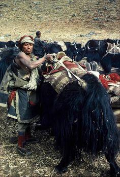 Piękne zdjęcia karawany przemiszczającej się po Himalajach.