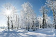 Beautiful Winter Landscape with Snow Covered Trees Landscapes Photographic Print - 61 x 41 cm