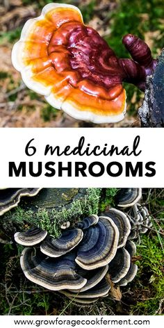 6 Medicinal Mushrooms for Your Health Learn more about six different medicinal mushrooms that have powerful health benefits. They will boost your immune system, mood, and give you energy! Calendula Benefits, Matcha Benefits, Coconut Health Benefits, Healing Herbs, Medicinal Plants, Natural Healing, Herbal Remedies, Health Remedies, Natural Remedies