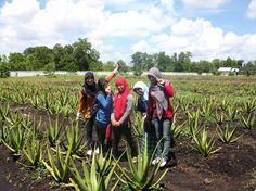 Aloe Vera Center Pontianak #Indonesia