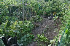 Vegetable garden  garden aerial by carleton500gardener, via Flickr