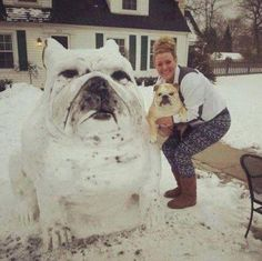 ❤ Great SNOW BULLY --- but never want enough snow to make one!! ❤ Posted by Tank R Tots Purebred English Bulldogs