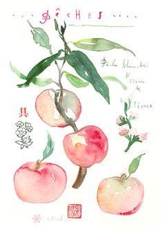 Peaches original watercolor painting botanical by lucileskitchen, $66.00