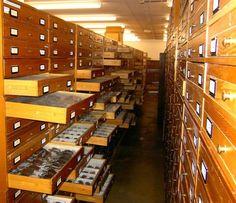 Cetoniidae collection Naturalis