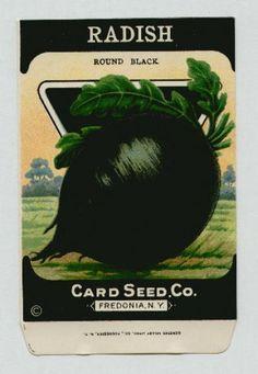 Antique Card Seed Company Radish