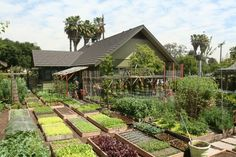 Meet The Family Growing 6,000 Pounds Of Food A Year In Their L.A. Backyard