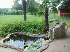 My parents garden pond with goldfish & lily pads..