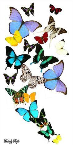 Beautiful butterflies, if I had an extra $1200
