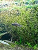 Wpuszczanie nowych ryb do akwarium