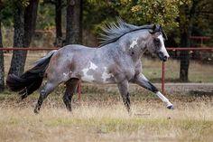 Equestrian Equipments – Equestrian Equipments Tips Horses And Dogs, Cute Horses, Pretty Horses, Horse Love, Beautiful Horses, Animals Beautiful, Wild Horses, American Paint Horse, American Quarter Horse