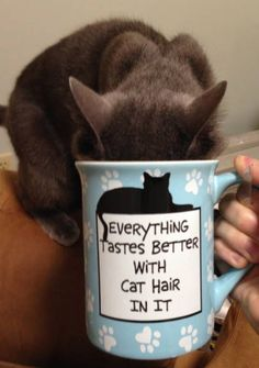 Everything tastes better with cat hair in it! X-D
