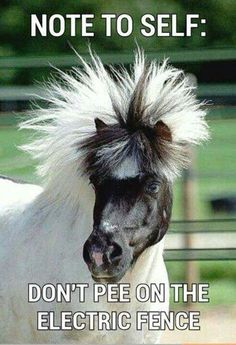 Do you love horses? Are horses your favorite animal? If yes, then you'll enjoy these funny horse memes. Funny Horse Memes, Funny Horse Pictures, Funny Horses, Funny Animal Quotes, Cute Horses, Animal Jokes, Pretty Horses, Cute Funny Animals, Funny Memes