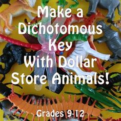 FREE For a Limited Time! Instructions to help your students make their own dichotomous key with those packs of dollar store animals! For Grades Biology Classroom, Biology Teacher, High School Biology, Science Biology, Teaching Biology, Middle School Science, Life Science, Biology Experiments, Ap Biology