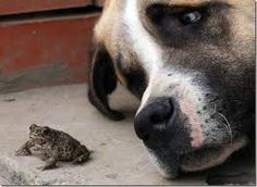 the dog looks worried about his little toad