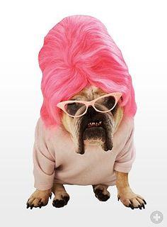 Die Sektretärin. #hunde #dogsplaces