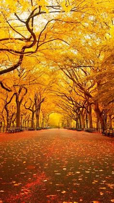 Yellow Canopy, Central Park, New York City #FallforNewYork