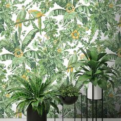 Parrot Talk Lush Green By Woodchip & Magnolia Green Wallpaper, Geometric Wallpaper, Magnolia Wallpaper, Marble Jar, Latest Wallpapers, Design Repeats, Wallpaper Samples, Tropical Vibes, Lush Green