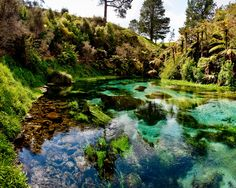 Waihou River, New Zealand.