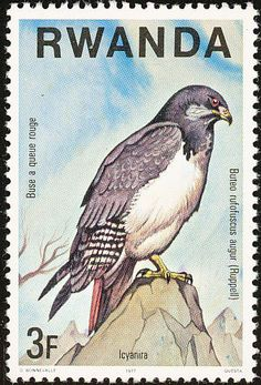 Augur Buzzard stamps - mainly images - gallery format