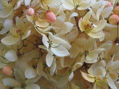 Shower Tree Blossoms
