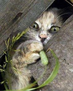 ...playful kitty #cat