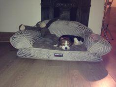 Beagle & Monkey