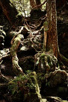 """Aokigahara    sea of trees    """"suicide forest """" at base of Mt. Fuji that has no wildlife on it (according to wikipedia). Compass points get disturbed by the minerals underground. People walk in and do not walk out--suicides? lost in labyrinth? Idea for character."""