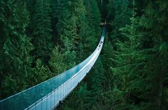 Capilano Suspension Bridge, Vancouver, British Columbia  That has to be the sweetest view!!!