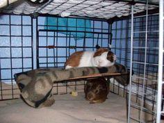 piggy bunkbed