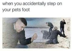 When you step on your pets foot...