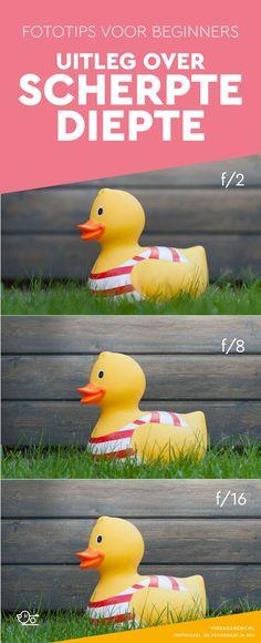 Fotografie tip voor beginners: uitleg over scherptediepte. Hoe maak je een foto met een wazige achtergrond? Door bijvoorbeeld het diafragma!