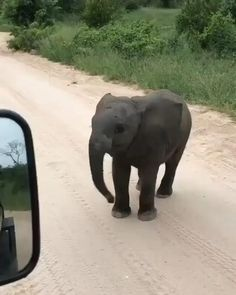 Baby elephant practicing his charge 🐘 Cute Animal Photos, Cute Animal Videos, Animal Pictures, Elephant Gif, Elephant Love, African Elephant, Elephant Facts, Baby Elephant Video, Mother And Baby Elephant
