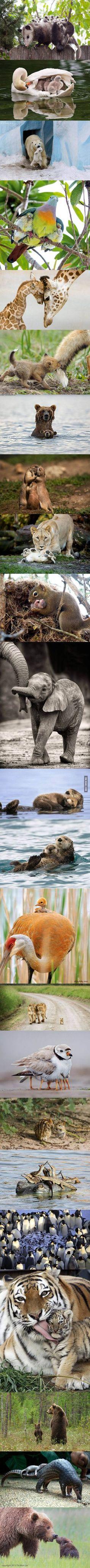 Animal parenthood = cuteness overload